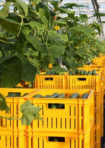 komkommerplanten-en-wagens